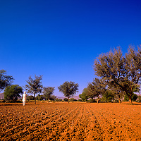 Siek man in white standing in a field of red earth