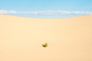 A lone shrub grows on the Eureka Dunes in Death Valley National Park on July 19, 2013.