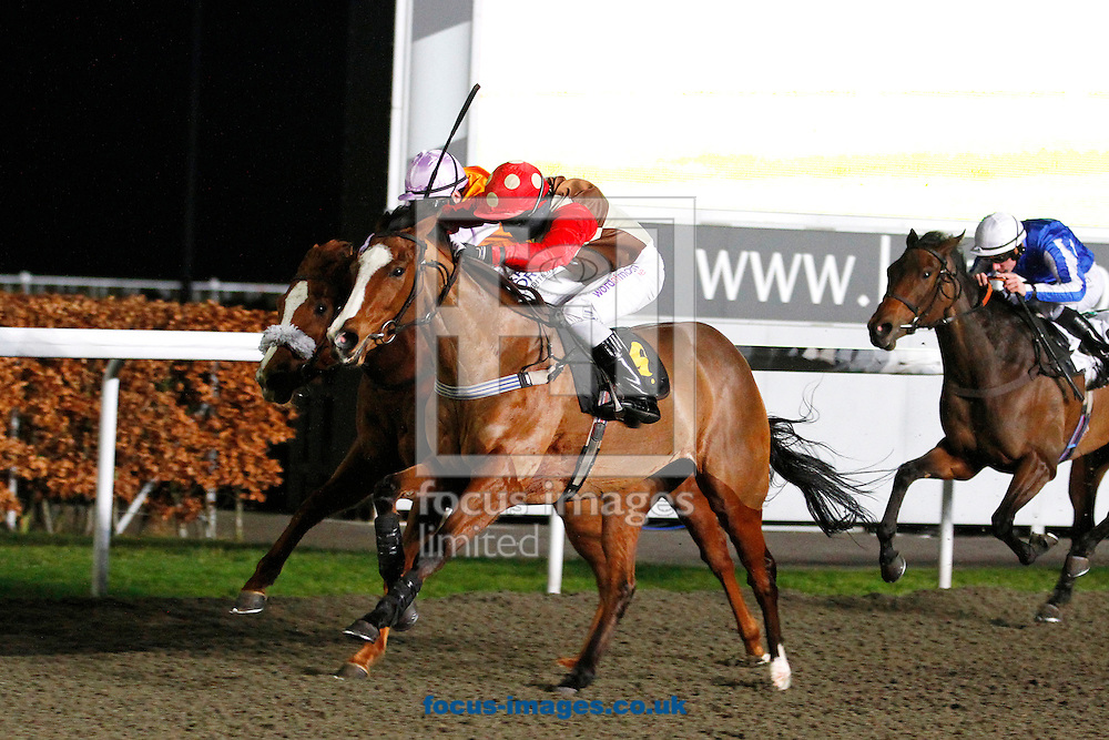 Picture by John Hoy/Focus Images Ltd. 07583422396.11/01/12.Fedora and Chris Catlin winning the skysports.com Fillies Handicap 7.15 race, Kempton Park, Middlesex