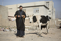 November 11, 2016 - Mosul, Nineveh, Iraq - 11/11/2016. Mosul, Iraq. A Mosul resident stands with his cow during a visit by soldiers, belonging to the Iraqi Army's 9th Armoured Division, to the city's Al Inisar district on the south east of the city. The Al Intisar district was taken four days ago by Iraqi Security Forces (ISF) and, despite its proximity to ongoing fighting between ISF and ISIS militants, many residents still live in the settlement without regular power and water and with dwindling food supplies...The battle to retake Mosul, which fell June 2014, started on the 16th of October 2016 with Iraqi Security Forces eventually reaching the city on the 1st of November. Since then elements of the Iraq Army and Police have succeeded in pushing into the city and retaking several neighbourhoods allowing civilians living there to be evacuated - though many more remain trapped within Mosul. (Credit Image: © Matt Cetti-Roberts via ZUMA Wire)