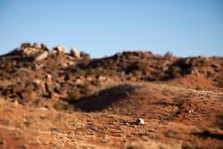 "Man mountain biking the ""North 40"" trail near the Bar M area. Moab, Utah."