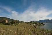 Poplar Grove vineyards, Naramata Bench, Penticton, Okanagan, British Columbia, Canada