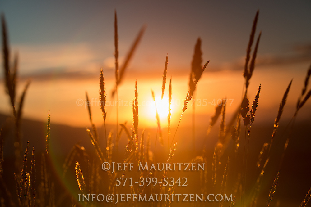 The setting sun silhouettes grass in an agricultural field high up in the Cotopaxi Province of Ecuador.