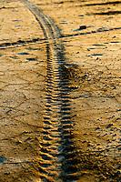 Il complesso produttivo delle saline è situato nel comune italiano di Margherita di Savoia (nome dato dagli abitanti in onore alla regina d'Italia che molto si adoperò nei confronti dei salinieri) nella provincia di Barletta-Andria-Trani in Puglia. Sono le più grandi d'Europa e le seconde nel mondo, in grado di produrre circa la metà del sale marino nazionale (500.000 di tonnellate annue).All'interno dei suoi bacini si sono insediate popolazioni di uccelli migratori e non, divenuti stanziali quali il fenicottero rosa, airone cenerino, garzetta, avocetta, cavaliere d'Italia, chiurlo, chiurlotello, fischione, volpoca..Impronta di coportone di un trattore sulla sabbia