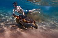 Green sea turtle, Chelonia mydas, and Oskar Sunding swimming, Maui, Hawaii.