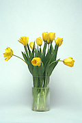 bouquet of yellow tulips in clear vase