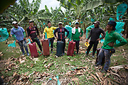 Banana cutters and carriers working at a plantation of Fairtrade-certified APPBOSA in Peru. The pillows protect the workers and the bananas. The cable in the background is used to carry the bananas to the processing plant.