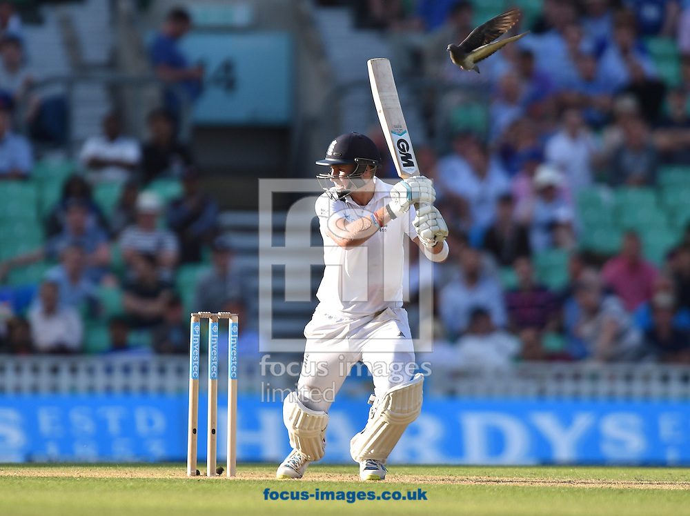 Batsman Joe Root of England has a pidgeon join him as he finishes his shot during the Investec Test Match match at the Kia Oval, London<br /> Picture by Alan Stanford/Focus Images Ltd +44 7915 056117<br /> 16/08/2014