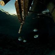 Dive Spot: Breakers Housereef (left)