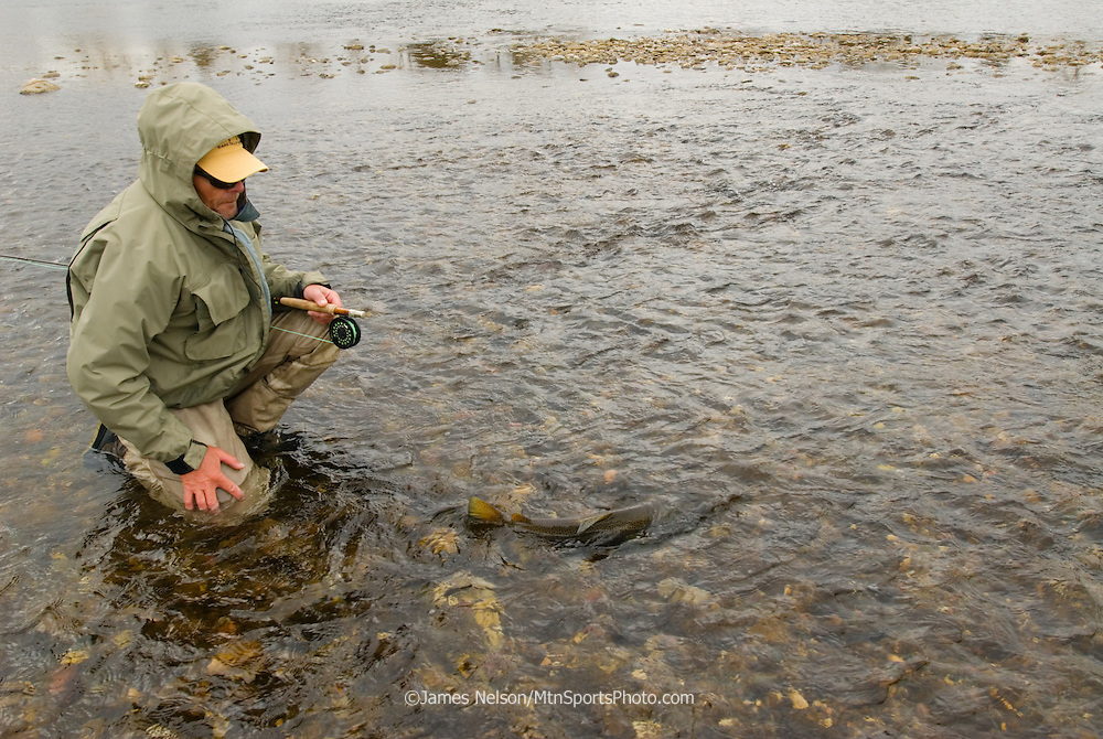 A fly fisherman releases a brown trout during a fall day on the main Snake River, Idaho.
