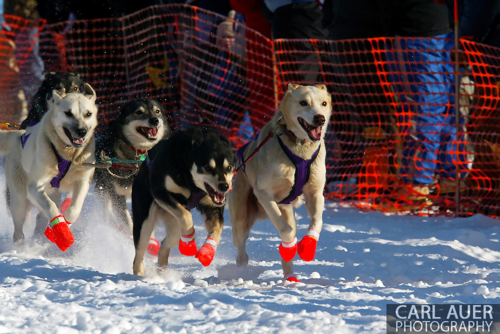 3/4/2007:  Willow, Alaska -  The lead dogs of Veteran Ben Stamm of Argyle, WI at the start of the 35th Iditarod Sled Dog Race