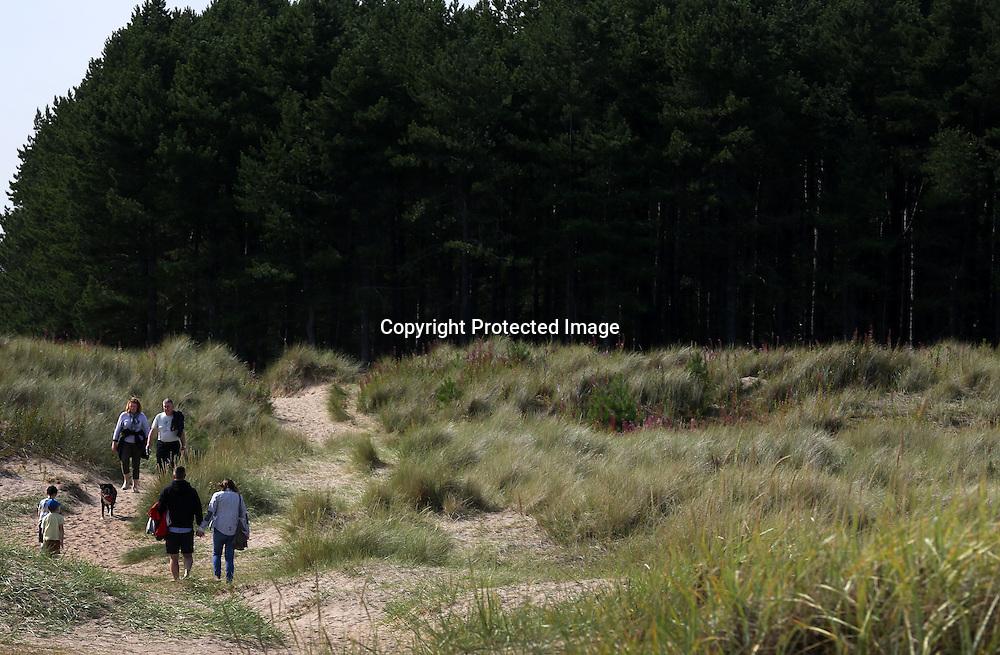 Tentsmuir forest Fife. 2015.Photograph David Cheskin