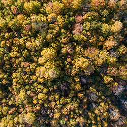Drone view of forest on Birch Ridge in New Durham, New Hampshire.