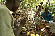 Daniel Apia Kouame Gboko (L) and his friend Severin crack cocoa pods on Daniel's cocoa plantation near the town of Moussadougou, Bas-Sassandra region, Cote d'Ivoire on Monday March 5, 2012. At back is Firimin Kouassi, 13, Daniel's nephew.