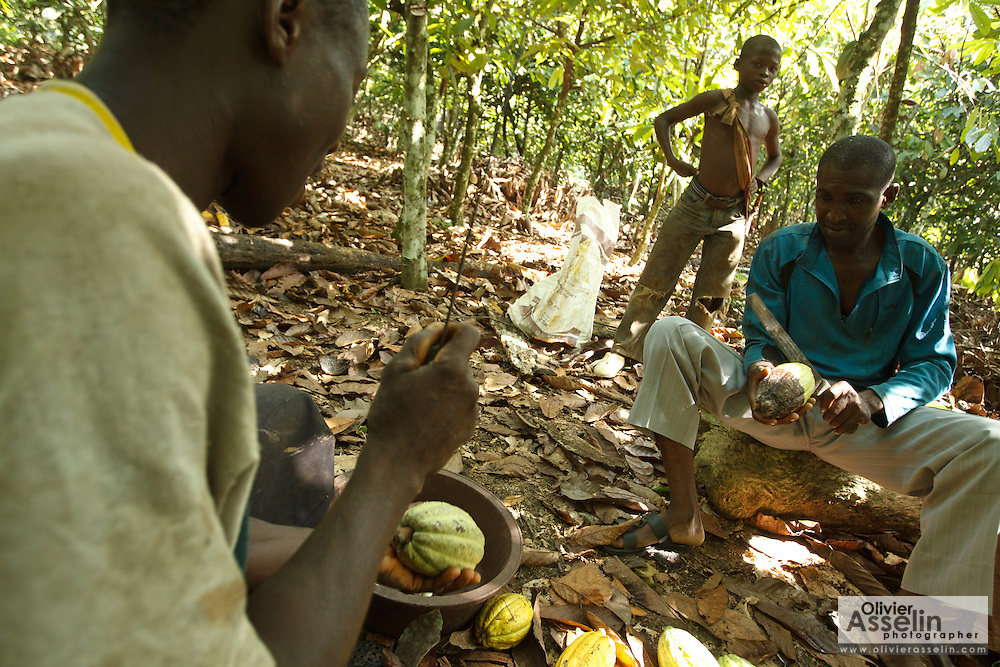Daniel Apia Kouame Gboko (L) and his friend Severin crack cocoa pods on Daniel's cocoa plantation near the town of Moussadougou, Bas-Sassandra region, Cote d'Ivoire on Monday March 5, 2012. At back is Firimin Kouassi, 13, Daniel's nephew.