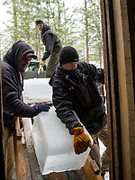 Eric Morse, Chris Burrows and Keegan Rasmussen make quick work of unloading a truck full of ice blocks into the Deephaven Ice House during the annual Ice Harvest on Thursday afternoon.  (Karen Bobotas/for the Laconia Daily Sun)