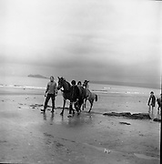 Connemara Pony 'Ocean Breeze' with her 4 month old foal at Portmarnock Strand and Malahide.<br /> 23.07.1964