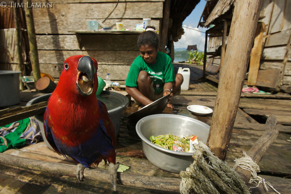A pet female Eclectus Parrot keeps a woman company as she does the washing in Kabilo Village, Mayalibit Bay..This is an area of Waigeo Island visited by Alfred Russel Wallace in the 1850's.