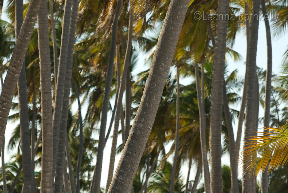 Palm trees on the white sand of Bavaro Beach, near Punta Cana, Dominican Republic.