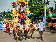 23 OCTOBER 2018 - CHONBURI, CHONBURI, THAILAND:  The water buffalo parade before the buffalo races in Chonburi. Contestants race water buffalo about 100 meters down a muddy straight away. The buffalo races in Chonburi first took place in 1912 for Thai King Rama VI. Now the races have evolved into a festival that marks the end of Buddhist Lent and is held on the first full moon of the 11th lunar month (either October or November). Thousands of people come to Chonburi, about 90 minutes from Bangkok, for the races and carnival midway.  PHOTO BY JACK KURTZ