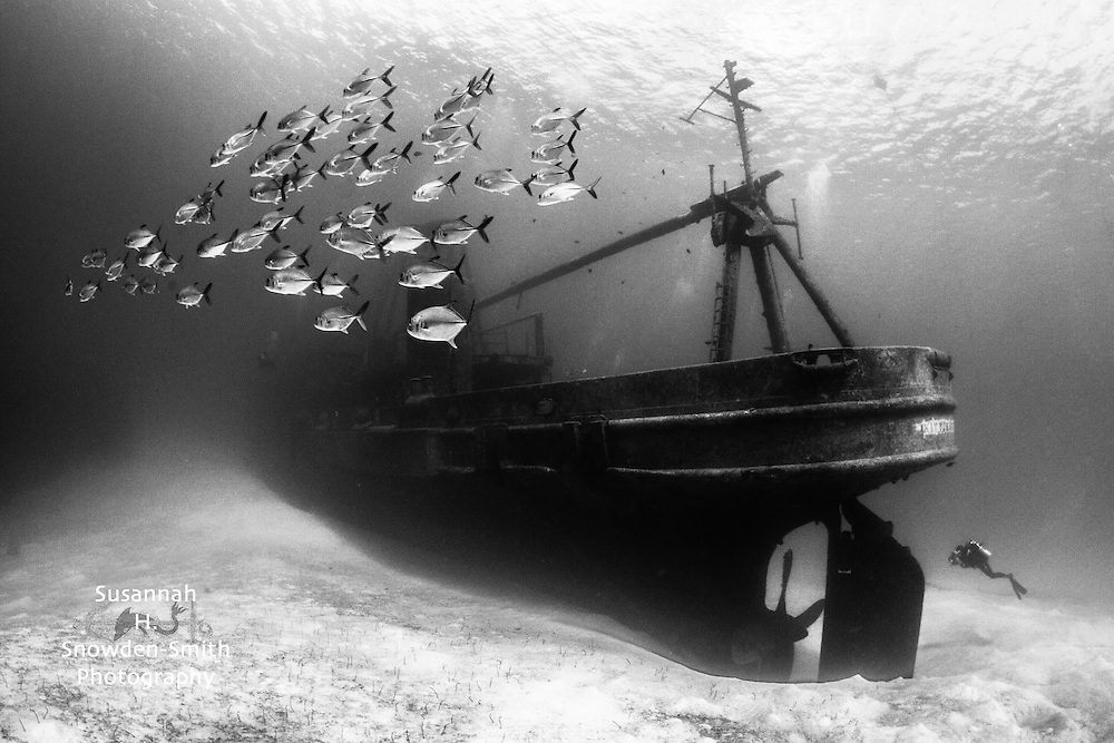 """Kittiwake and Diver"" - Commended, Underwater Photographer Of The Year Award 2016. Grand Cayman"