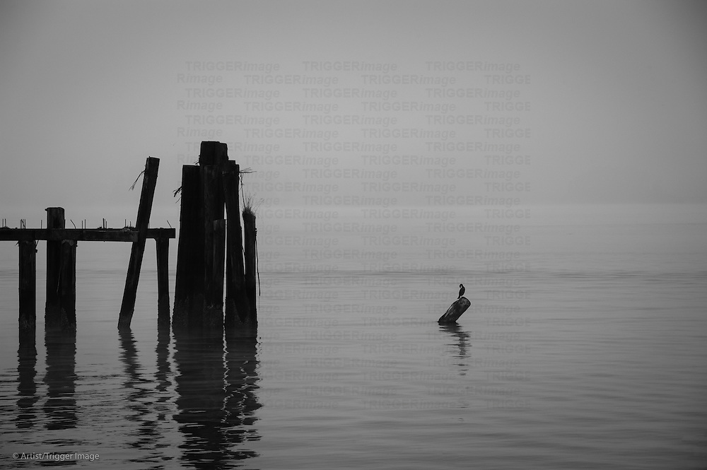 A long bird sitting on a stump in foggy waters  with a part of a decaying pier.