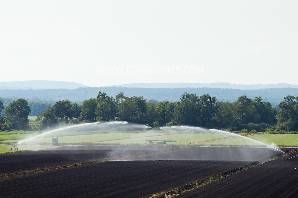 Pine Island, New York - Irrigation water sprays over a Black Dirt farm field on Aug. 24, 2012.