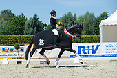 Prfg. 18, Westfalen-Championat 5j. Dressurpferde