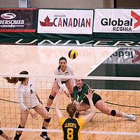 4th year libero  Taylor Ungar (13) of the Regina Cougars in action during Women's Volleyball home game on November 3 at Centre for Kinesiology, Health and Sport. Credit: Casey Marshall/Arthur Images