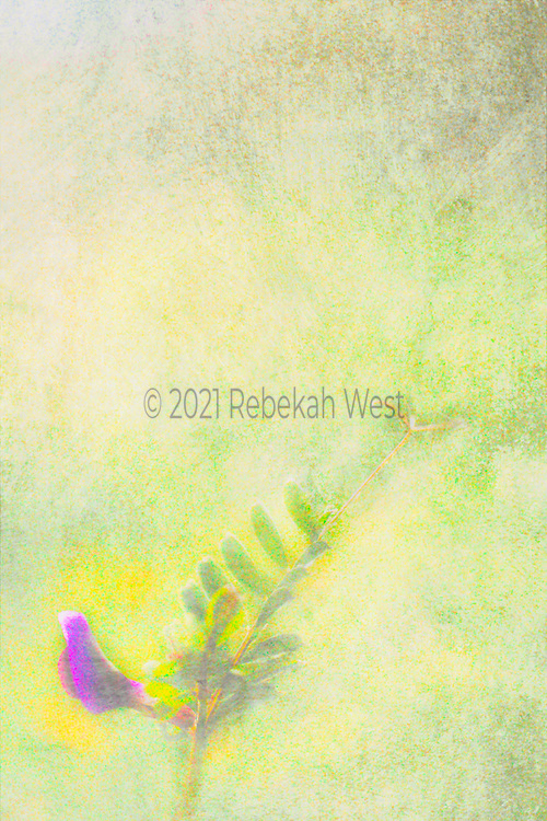 dreamy vivid phot pink flower bud surrounded by pastel yellow aura sits in lower left corner with its stems, leaves and buds reaching up toward right center in vertical field, background wash of yellow greens in soft bands of color texture, greenery undertones and overtones, greenery, flower art, feminine, high resolution, licensing, iridescent, vertical, 3196 x 4794