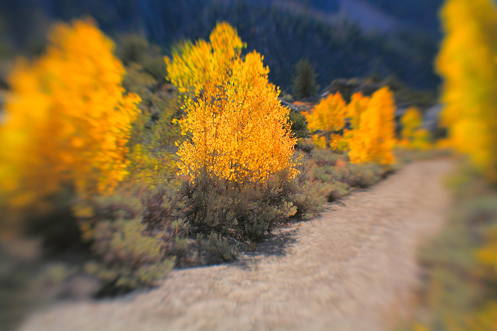 North Lake Road View - Fall Color - Lensbaby