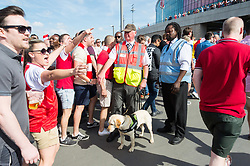 © Licensed to London News Pictures. 27/05/2017. London, UK. Security staff with a sniffer dog checks Arsenal football fans as they enter Wembley stadium for the Emirates FA Cup final. The security level was in response to Manchester Arena bombing when 22 people died and 55 people were injured in one of the most deadly attacks in the UK. Photo credit: Ray Tang/LNP