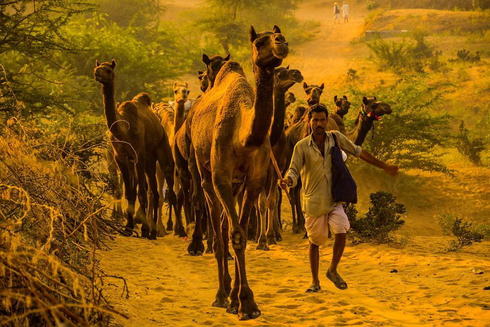 Pushkar Camel Fair November 2014