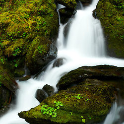 Vertical panorama of Bunch Falls in Olympic National Park near Lake Quinault, WA.