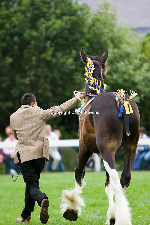 Great Yorkshire Show 2010<br /> Mr P M Moss's  Bay Yearling Colt<br /> Colle Grove Coalman<br /> Sire  Acle Merlyn