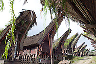 Rantepao, Tana Toraja, Sulawesi, Indonesia, October 2010. The Tongkonan houses in the village of Palawa. When a Torajan dies in Toraja land, family members of the deceased are required to hold a series of funeral ceremonies that usually last for several days before the deceased is brought to a funeral site for burial.  The Toraja people live a traditional life in the forested mountains of South Sulawesi.  Photo by Frits Meyst/Adventure4ever.com