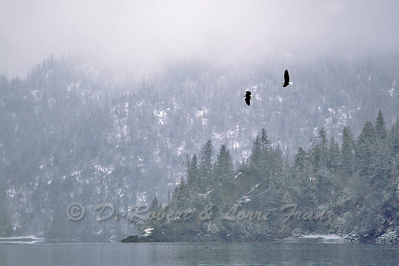 """Images from the 2011 """"Bald Eagles of Alaska"""" photo tour"""