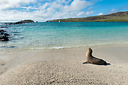Barrington Bay on the island of Santa Fe, Galapagos.