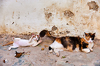 Grece, Crete, chat des rues. // Greece, Crete island, street cat