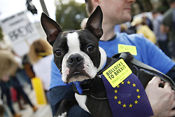 """© Licensed to London News Pictures. 07/10/2018. London, UK. Pro-Remain dog owners march on parliament to demand a """"People's Vote"""" on the final Brexit agreement. Photo credit: Peter Macdiarmid/LNP"""