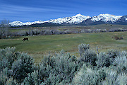 A pastoral horse pasture with the eastern sierra in the backround on highway 89 near the nevada/california border.