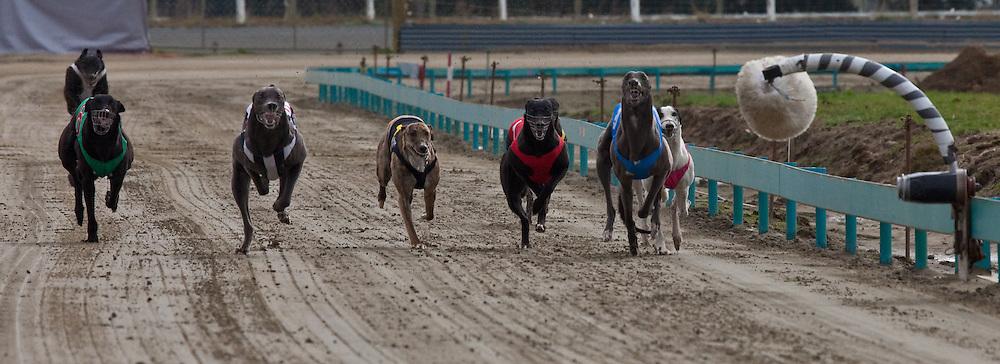 Greyhound Racing, Invercargill, Southland, New Zealand