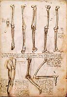 Royaume-Uni, Berkshire, Windsor Castle, The Royal Collection, Leonard de Vinci, Anatomie // United Kingdom, Berkshire, Windsor Castle, The Royal Collection, Leonardo da Vinci, Anatomy