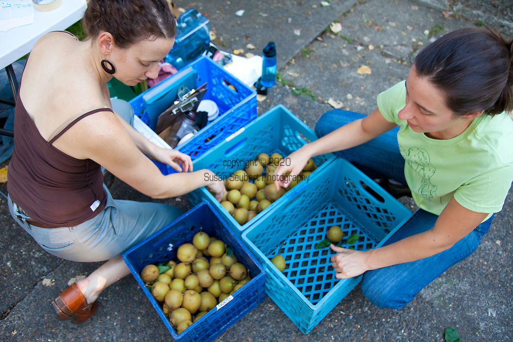 Portland Fruit Tree Project is a grass-roots non-profit organization that provides a community-based solution to a critical and growing need in Portland and beyond: Access to healthy food. By empowering neighbors to share in the harvest and care of urban fruit trees, the Fruit Tree Project is preventing waste, building community knowledge and resources, and creating sustainable, cost-free ways to obtain healthy, locally-grown food.  The Portland Fruit Tree Project organizes people to gather fruit before it falls, and make it available to those who need it most. The Project registers fruit and nut trees throughout the city, bringing people together to harvest and distribute thousands of pounds of fresh fruit each year, and teach tree care and food preservation in hands-on workshops.  Asian pears being sorted.