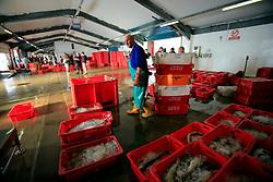 UK CORNWALL NEWLYN 10JUN08 - General view of Newlyn Fish Market in Newlyn harbour in Cornwall, western England...jre/Photo by Jiri Rezac / WWF UK..© Jiri Rezac 2008..Contact: +44 (0) 7050 110 417.Mobile:  +44 (0) 7801 337 683.Office:  +44 (0) 20 8968 9635..Email:   jiri@jirirezac.com.Web:    www.jirirezac.com..© All images Jiri Rezac 2008 - All rights reserved.