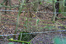 FILE IMAGE © Licensed to London News Pictures. 07/12/2019. Beaconsfield, UK. Evidence identification markers inside a cordon prior to a detailed search beginning as the Metropolitan Police Service confirm they are searching woodland in Beaconsfield, Buckinghamshire in connection with the disappearance and murder of Mohammed 'Shah' Subhani. Police have been in the area conducting operations on Hedgerley Lane since Thursday 5th December 2019 and are combing wooded area with specialist officers assisted by specialist search dogs. Photo credit: Peter Manning/LNP