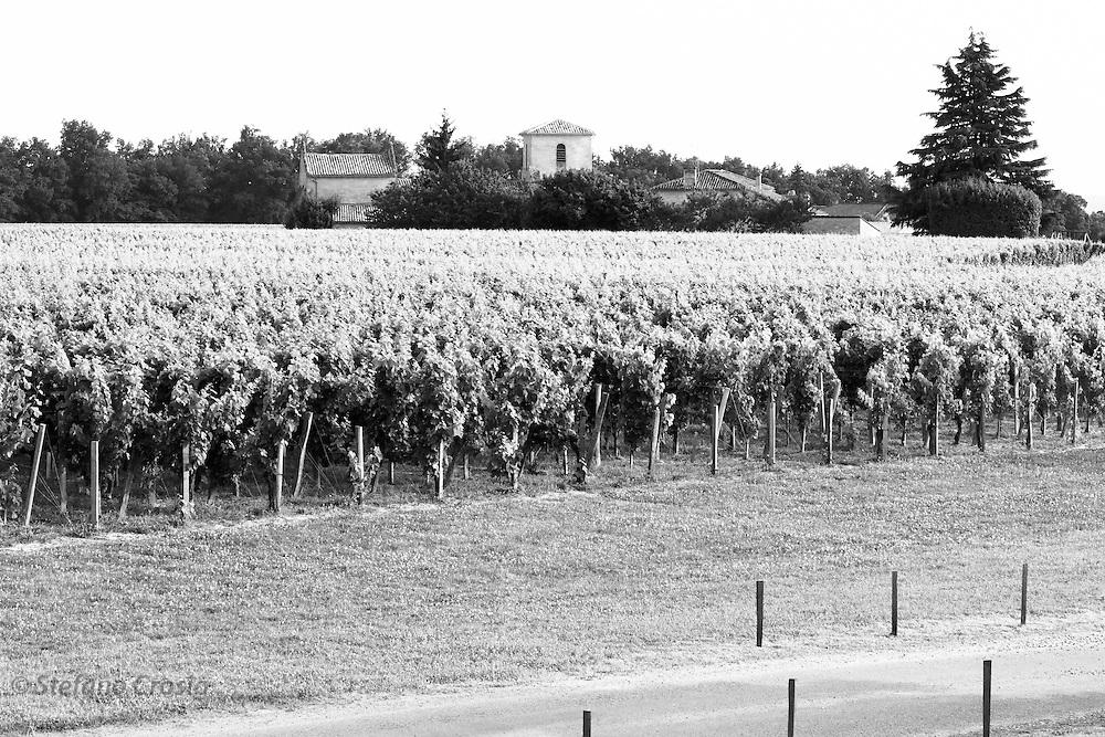 FRANCE, Saint Emilion<br /> The vineyards of Chateau de Ferrand (Grand Cru Class&eacute;)
