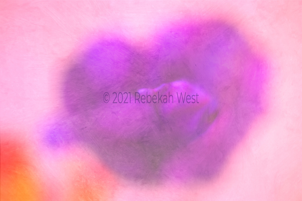heart shaped petaled flower opening to front like a tongue, vivid fuschia red violet, soft pink background, orange accents lower left, horizontal field,flower art, feminine, high resolution, licensing, iridescent, 5109 x 3406