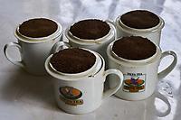 Kenya, Kericho county, Kericho, usine de thé Tilya // Kenya, Kericho county, Kericho, Tilya tea factory