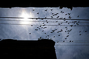 Pigeons fly over one of the many vacant businesses that they roost inside of in Monessen, Pa.,<br /> <br /> Monessen, a third-class city, faces the same problems as th other former steel towns — declining population and tax revenue after the mills shut down. The city's population has dropped to 7,600 from a high of 20,268 in 1930.